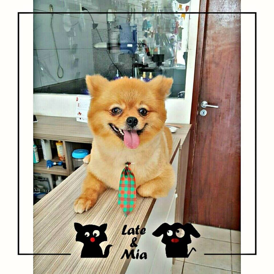 Late & Mia Pet Shop